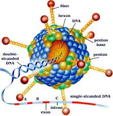 Virus JE
