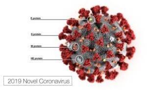 Immagine del nuovo Coronavirus SARS-COV2