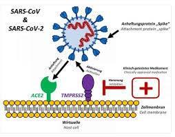 proteina ACE2 chiave di entrata per COVID-19