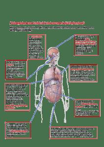 il coronavirus attacca i vari distretti dell'organismo in COVID-19